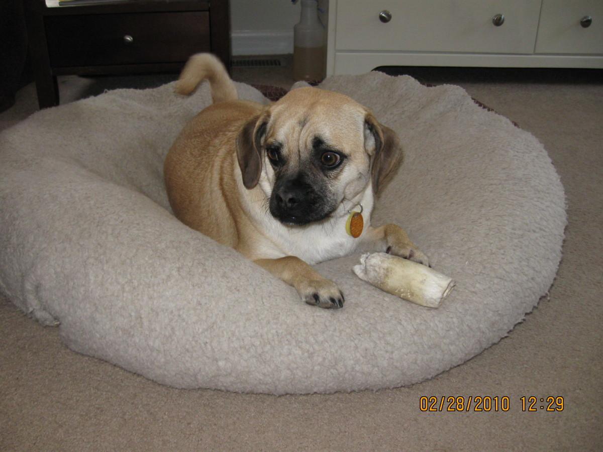 Emily's little sister, Bella, loves her PetSmart bone.