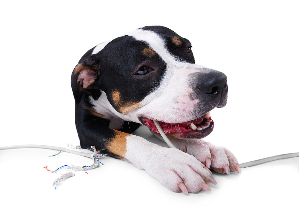 Don't let your pup chew on chords!