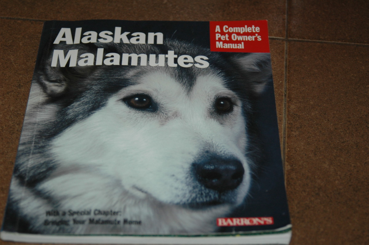 all-about-malamutes-tips-on-bringing-home-your-new-puppy
