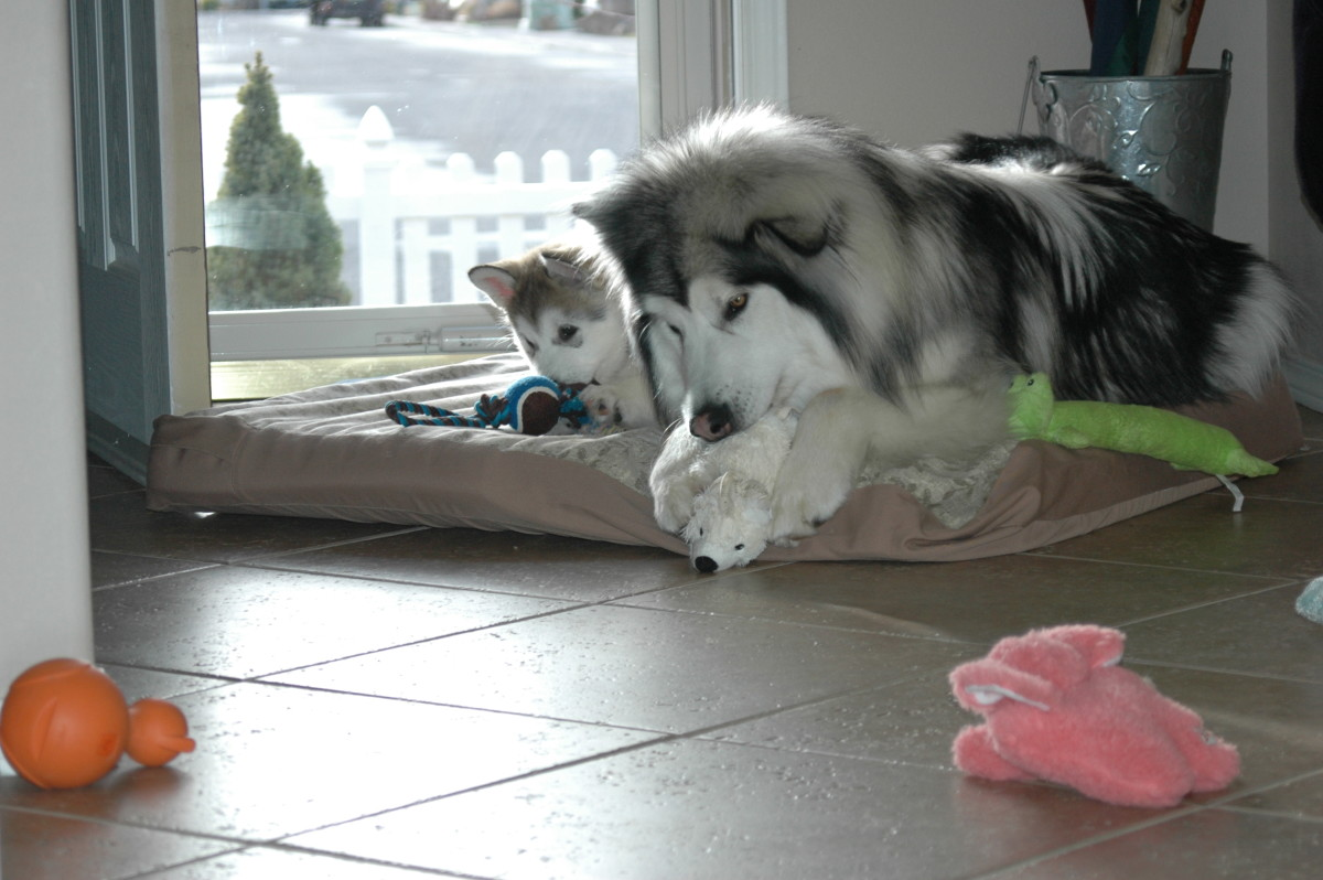 chewing together