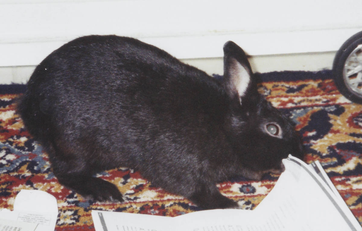 Be careful of what you leave on the floor when your rabbit is out of its cage. Anything down at its level is fair game for chewing for a rabbit!