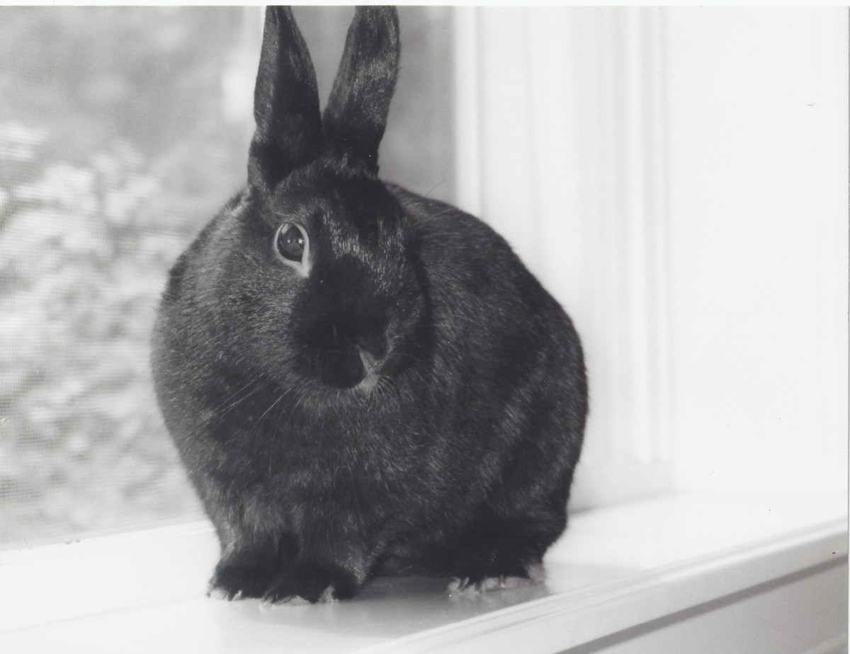 Bunnies can be wonderful pets for both older children and adults alike.