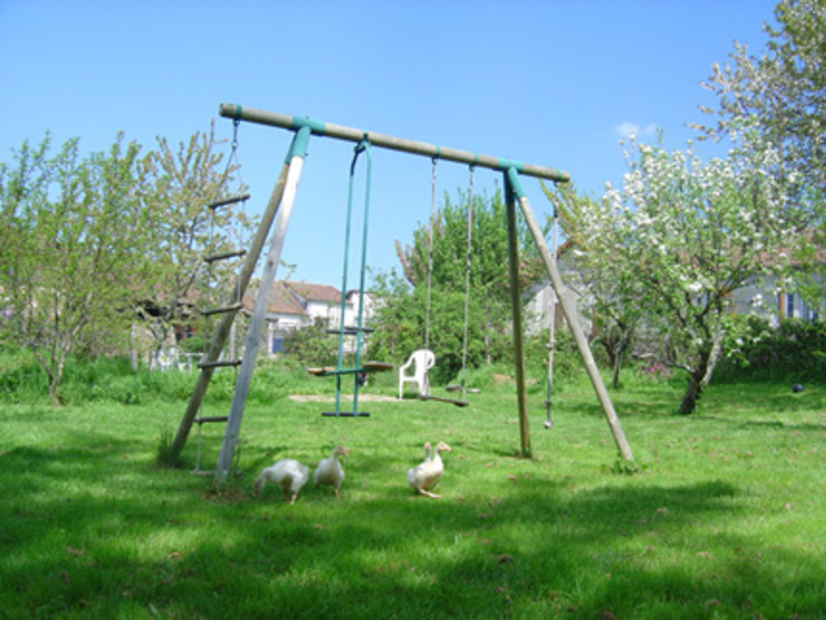 Goslings trimming the grass around the swings in our play area