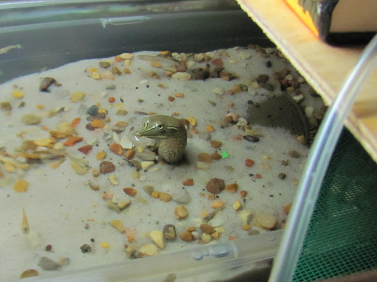 My turtle enjoying the sand box.