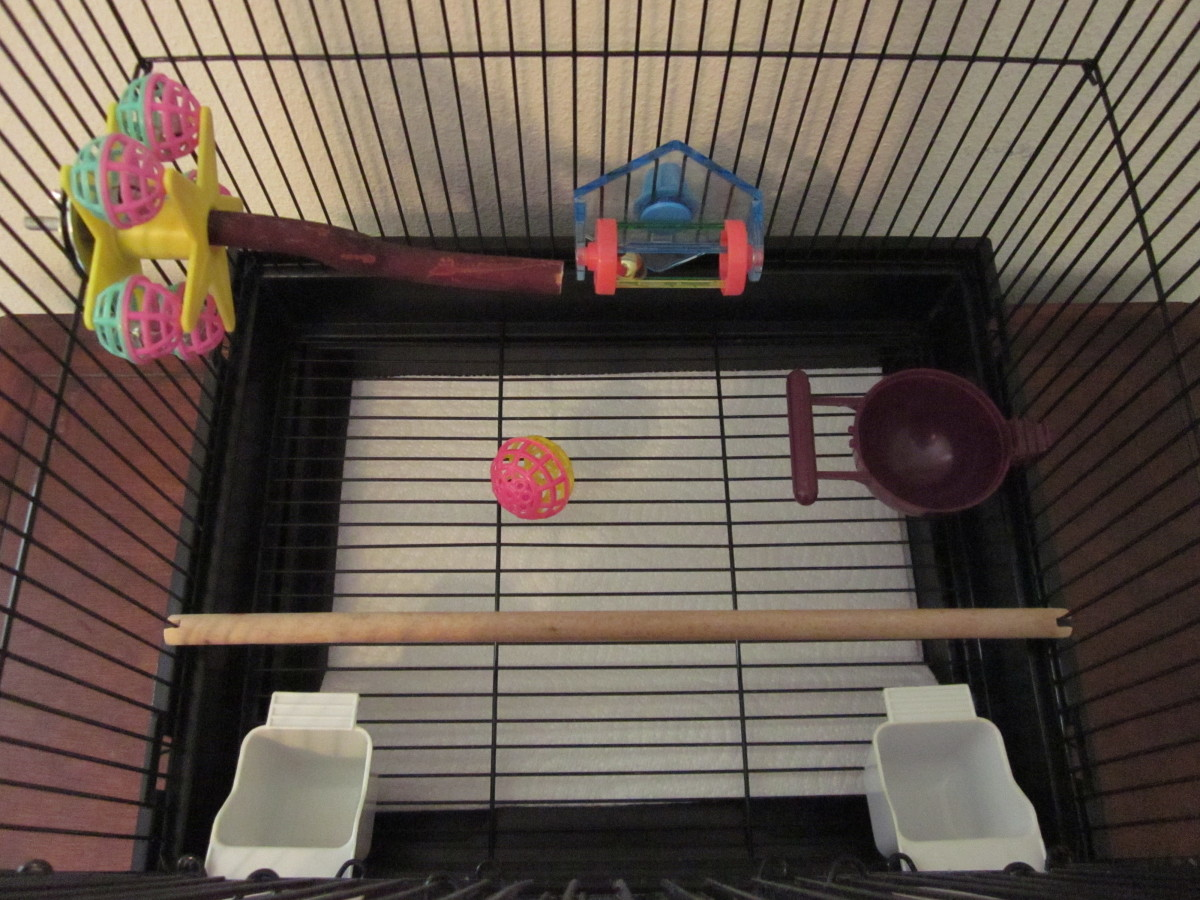 View of a budgie cage from above. Perches and toys can be arranged in such a way that best suits your bird.