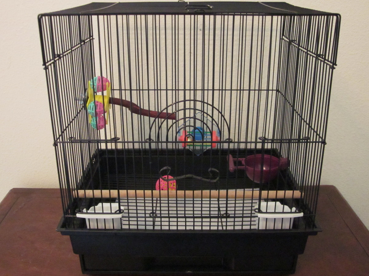 An example of a basic cage set-up for a budgie. (Pardon the absence of a mineral treat—I did not have one to use.)