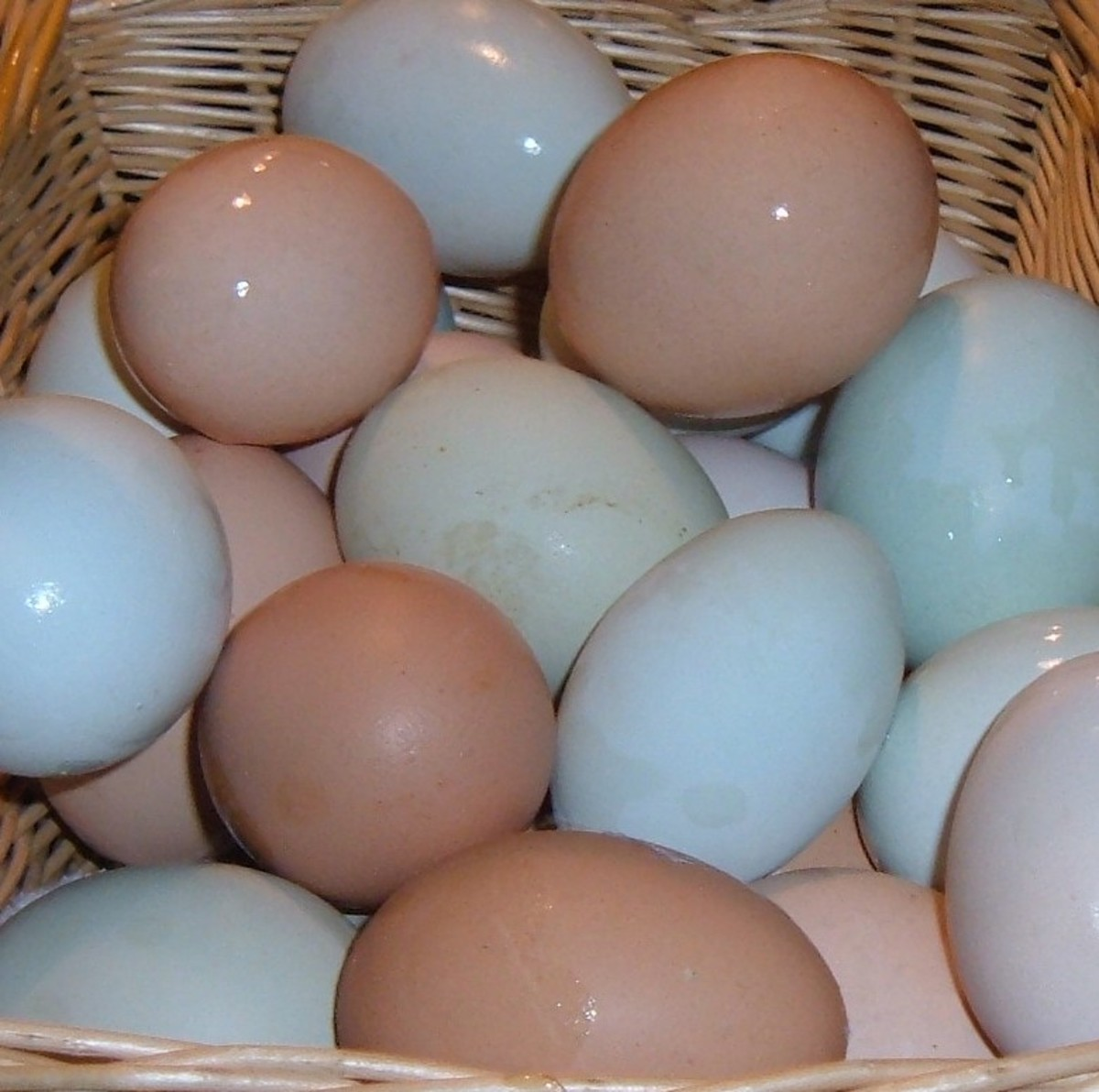 Fresh eggs are the best!