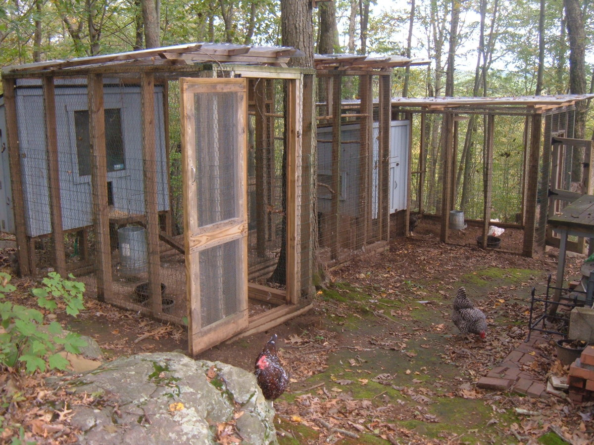 Our urban chicken coop in the Spring.