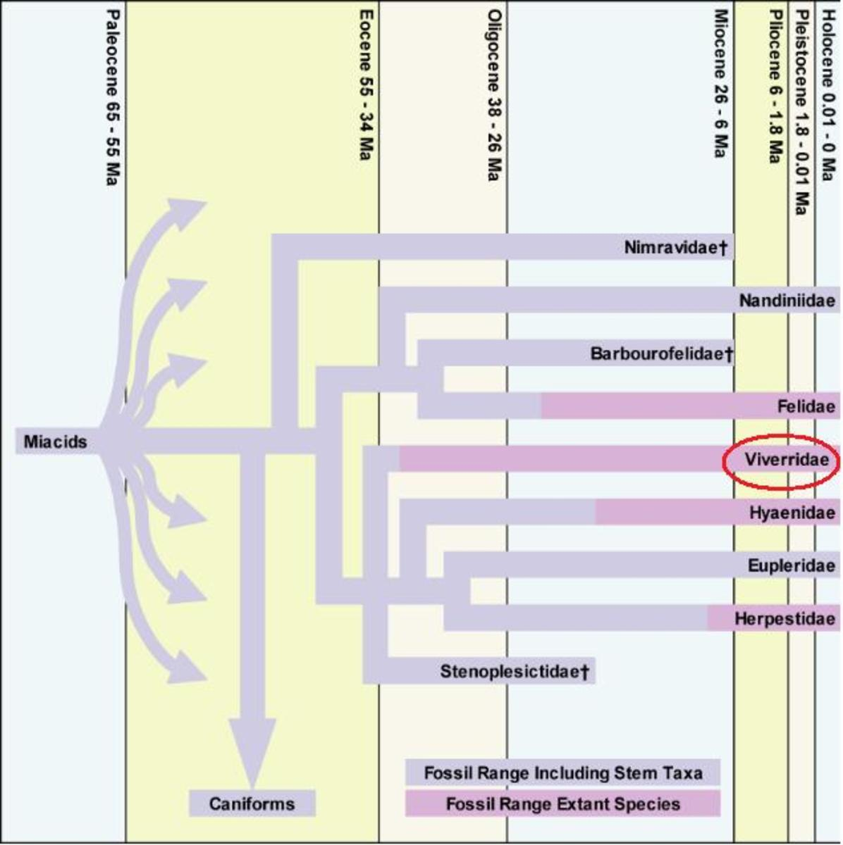 Map showing the evolutionary path of Carnivora