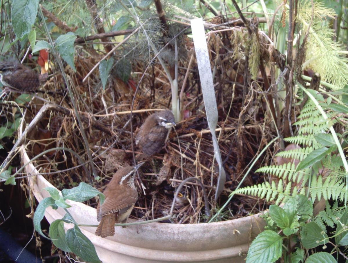 Flower pots and hanging baskets are other favorite nesting sites.