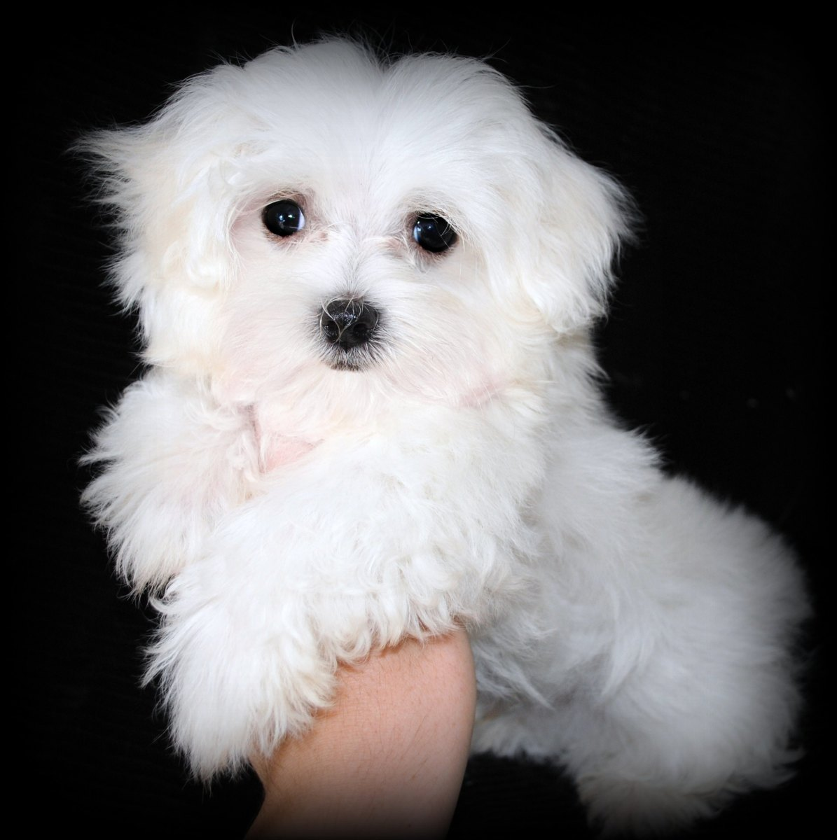 How To House Train A Puppy Fast Three Training Methods To