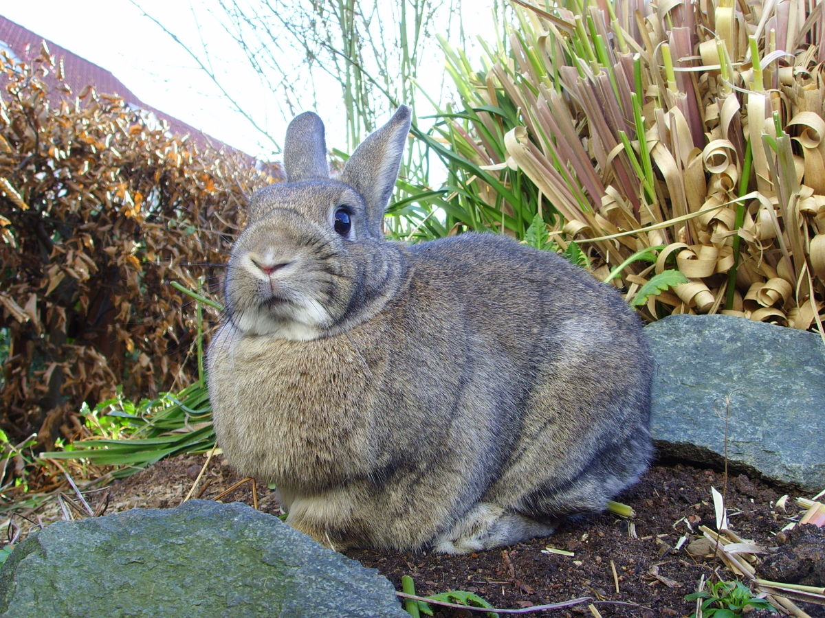 Gardening products including pesticides can be fatal to a domestic rabbit. Signs of poisoning are loss of appetite and discharge from the eyes, mouth, or anus.