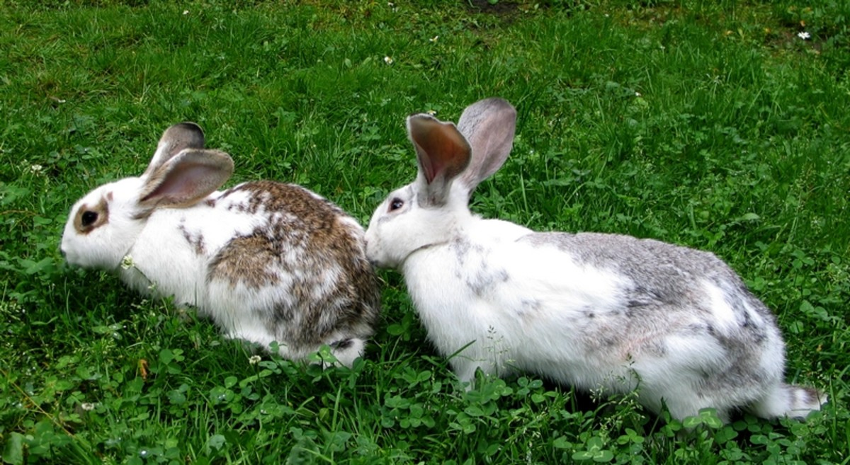One of the most common causes of sudden rabbit death is that the rabbit was meant to live indoors and could not handle the temperatures outdoors.