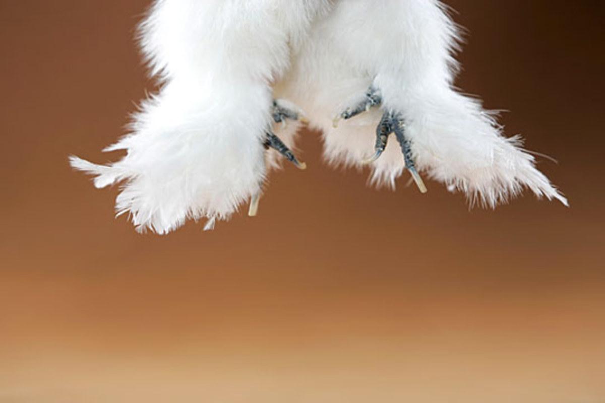 Silkie Feet