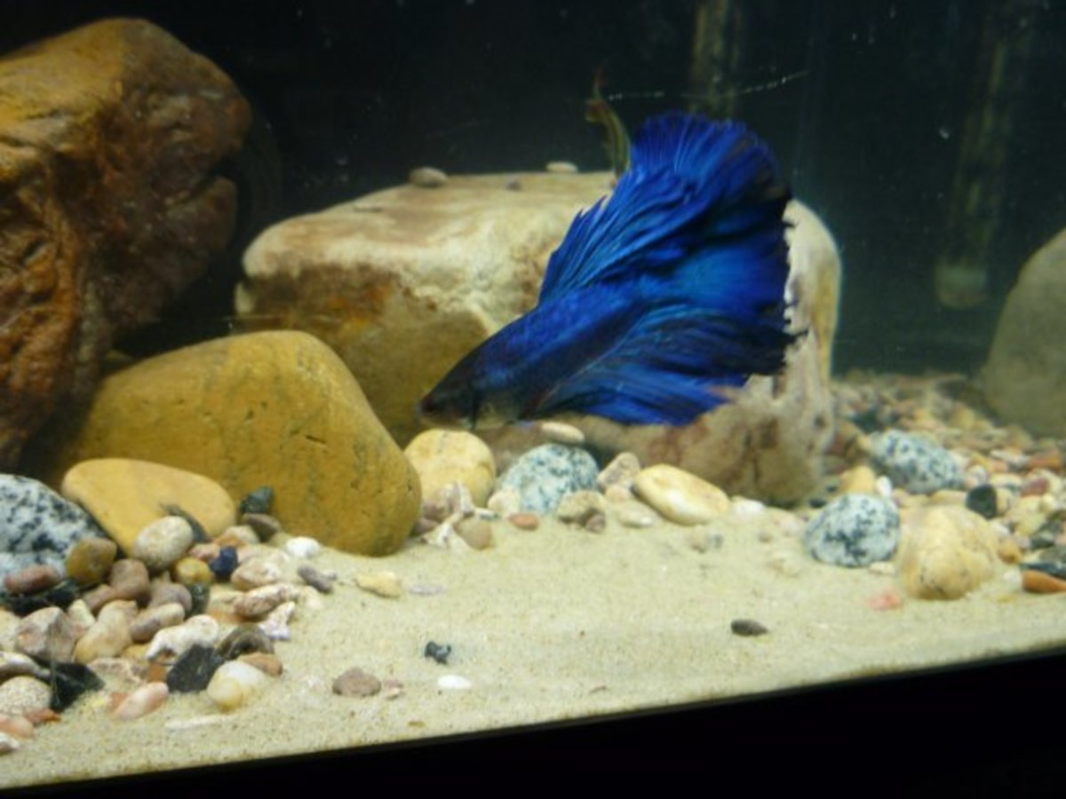 Sand In Aquariums A Fish Guide Pethelpful By Fellow Animal Lovers And Experts