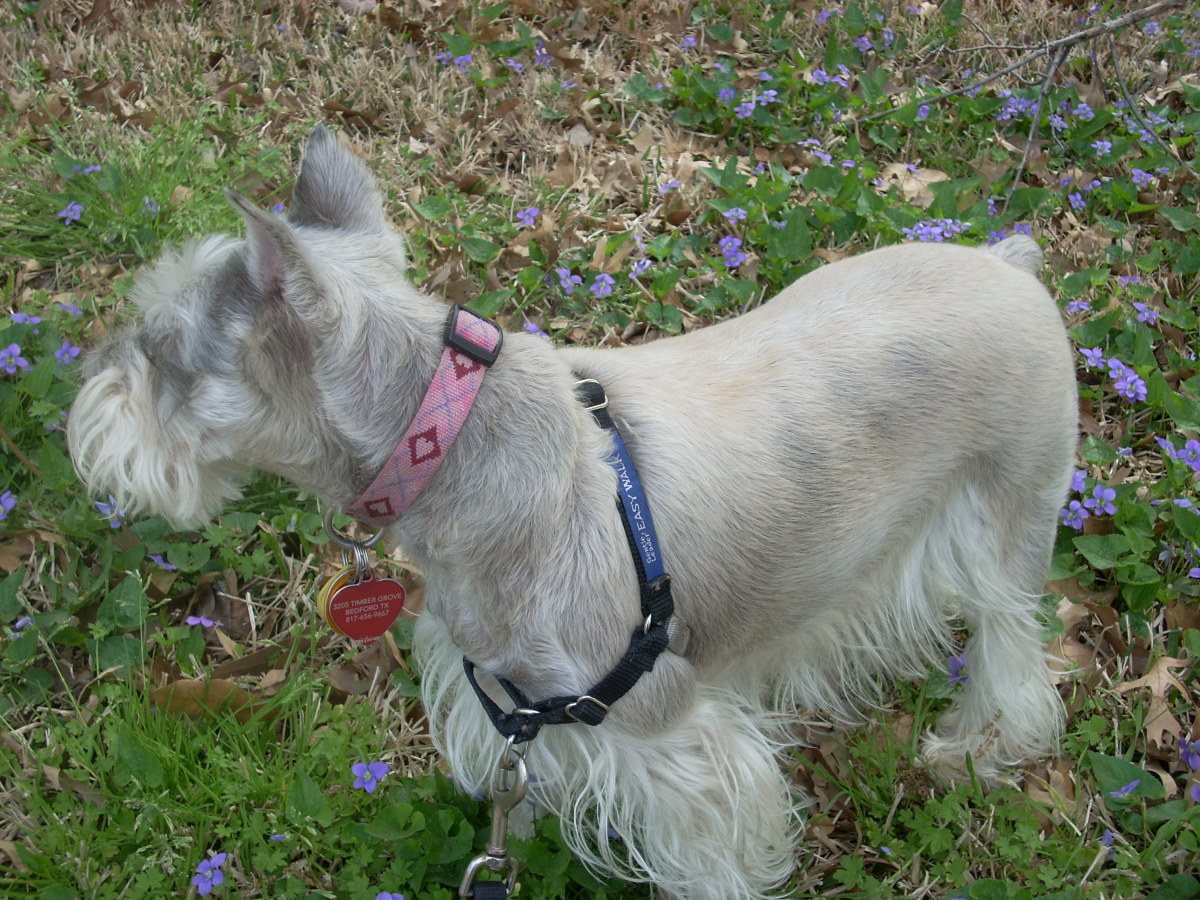 Meadow takes a breather on her daily walk