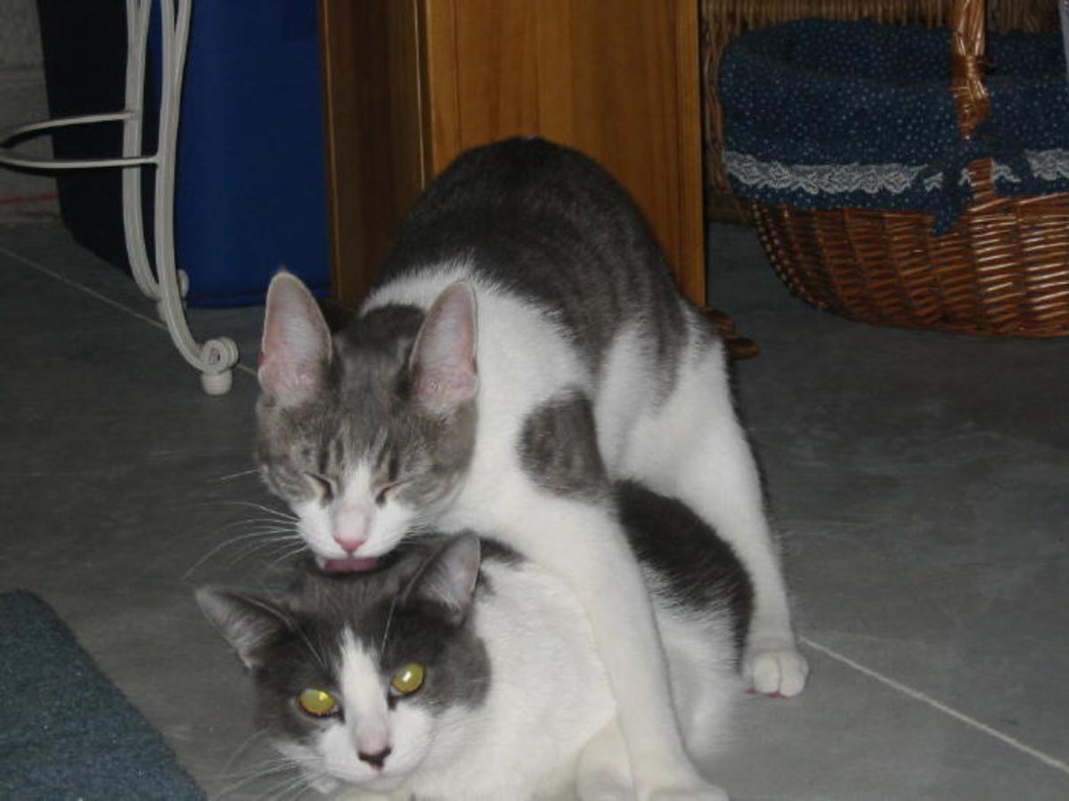 """Misty giving her """"sister"""" Dixie a kiss on top of her head."""