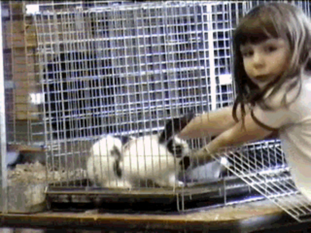 Katy reaching into the cage to get Flossy out. She was also a gentle bunny as long as you supported her properly. She did not like her back feet dangling.
