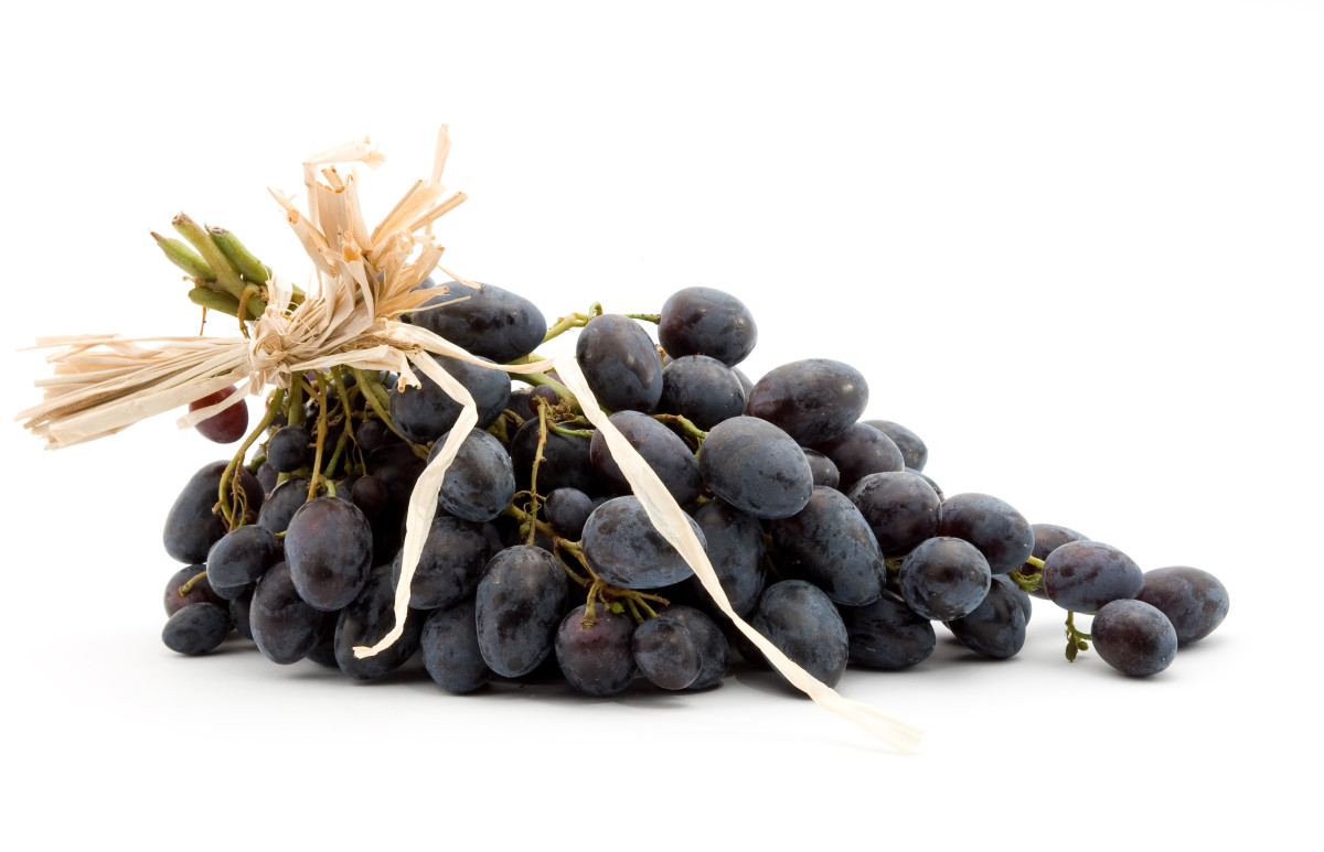 NEVER feed dogs grapes or raisins!