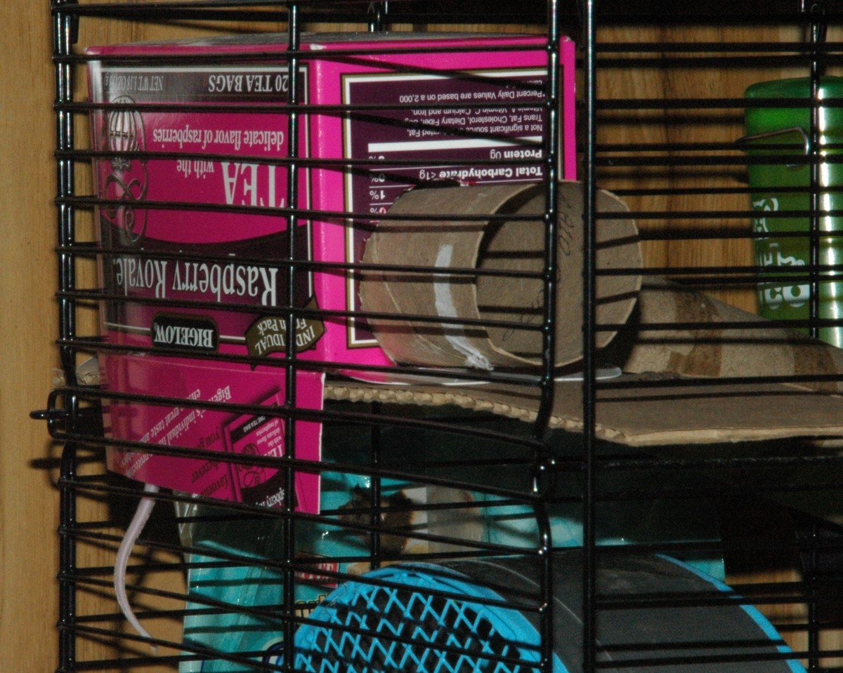 Use boxes, cardboard tubes, and slats to create a changeable environment. Mice will more likely accept new friends if the cage feels different.