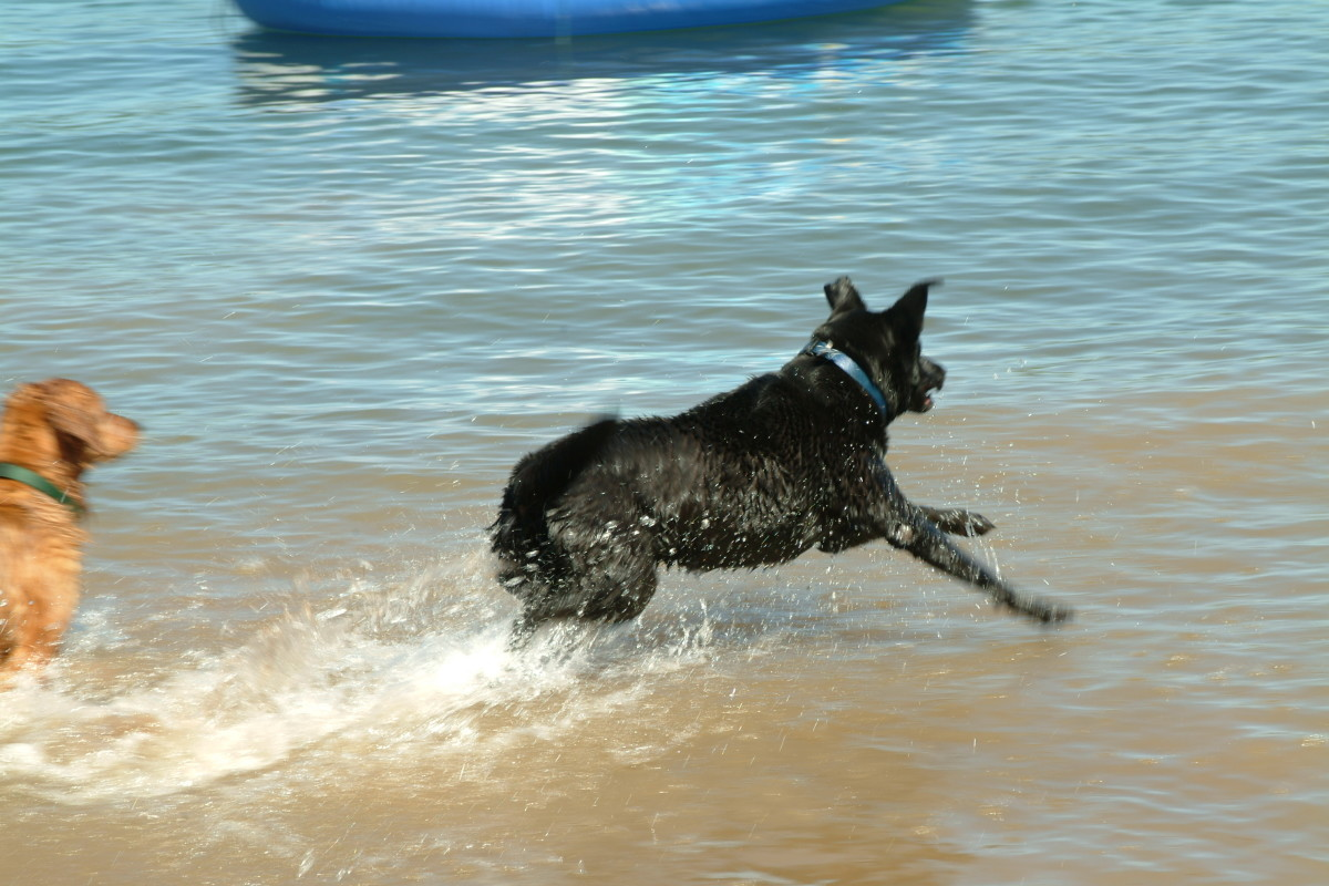 Healthy Joints keep your dog Happy and  Active!