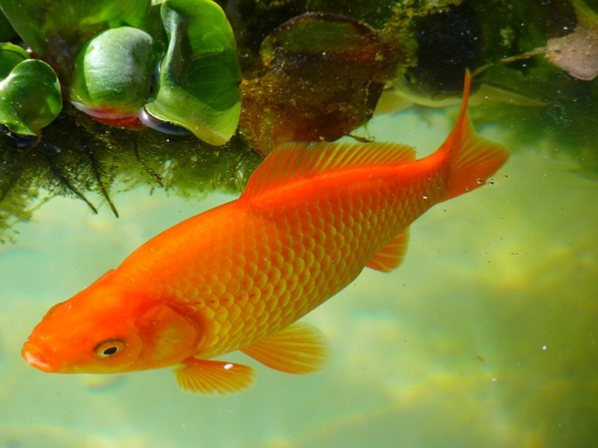 The Best And Worst Beginner Fish For Your Aquarium