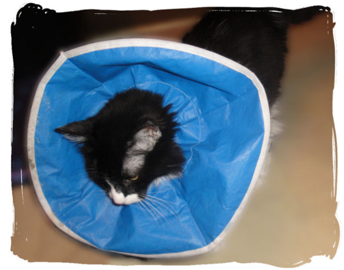 Soft Cat Cone: This is my favorite cone for my pets. It's flexible and doesn't get in the way of eating, drinking, or maneuvering in small places.