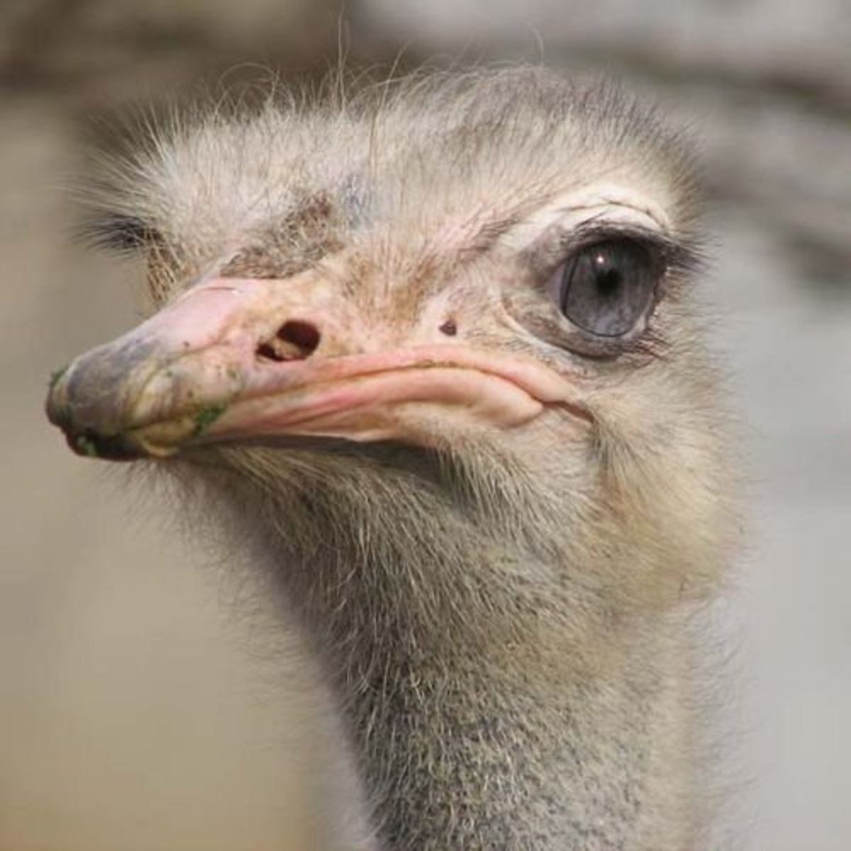 If you name your pet frog Ostrich, she can be called Ostrich the Frog.