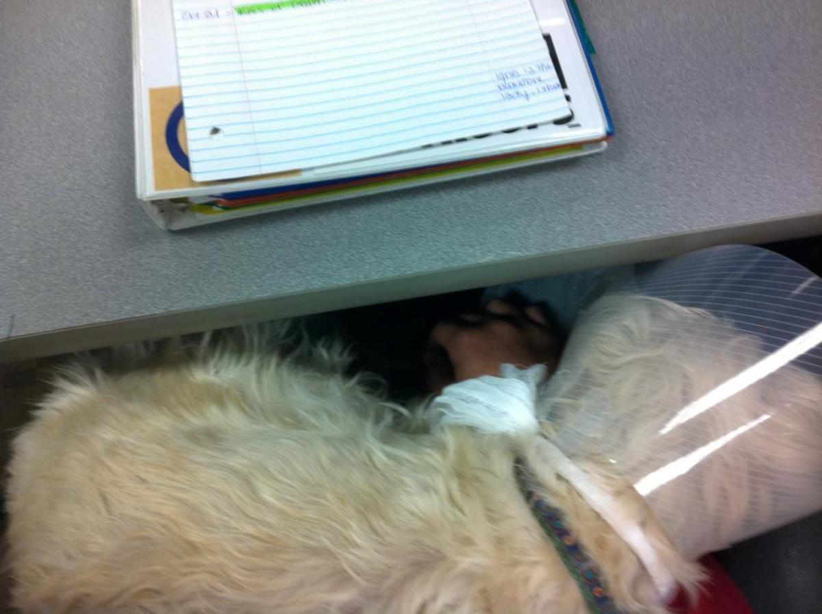 Can Hard Water Cause Bladder Stones In Dogs