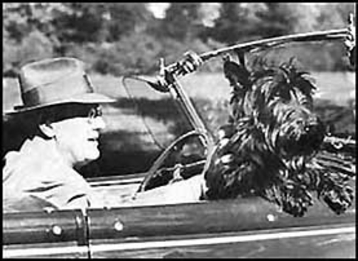Franklin Roosevelt, a former President of the United States setting a bad example; and worse, in a convertible!