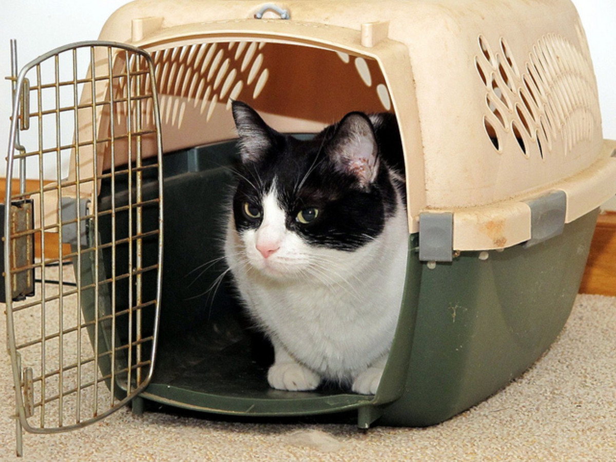Cats may dislike being put in a carrier, but it's for their own safety, and yours!