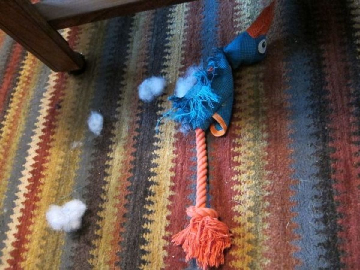 Death of a duck toy: This one didn't last long.