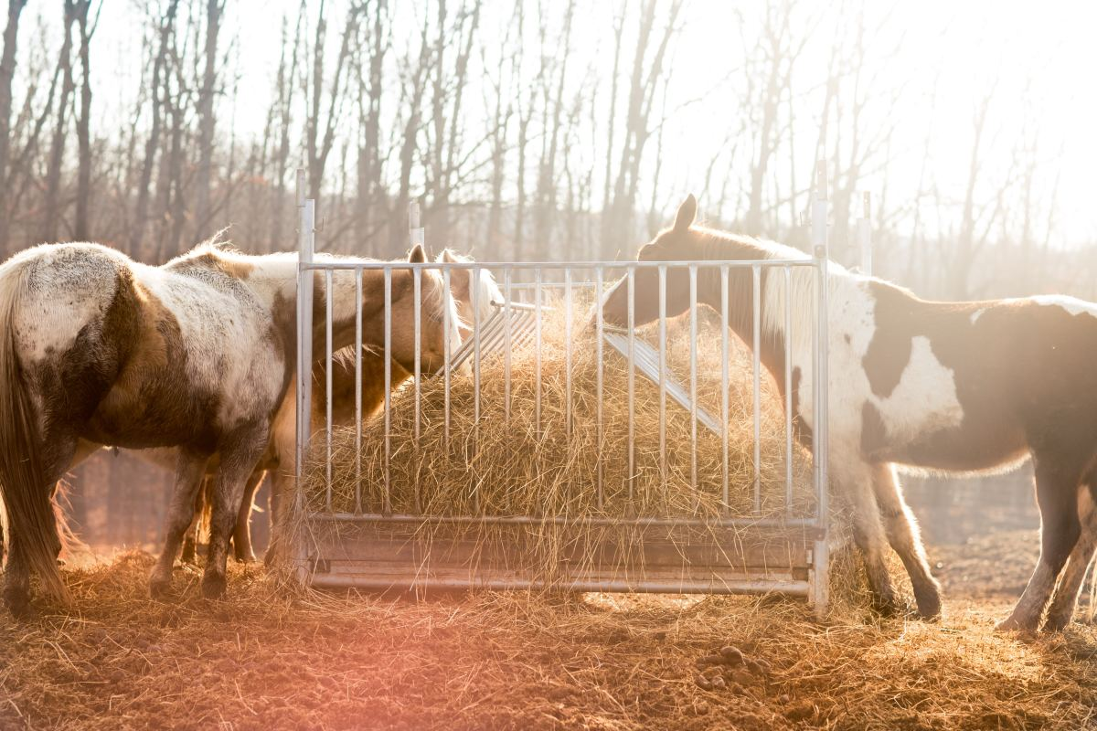 A comfortable place for horses to feed is crucial.