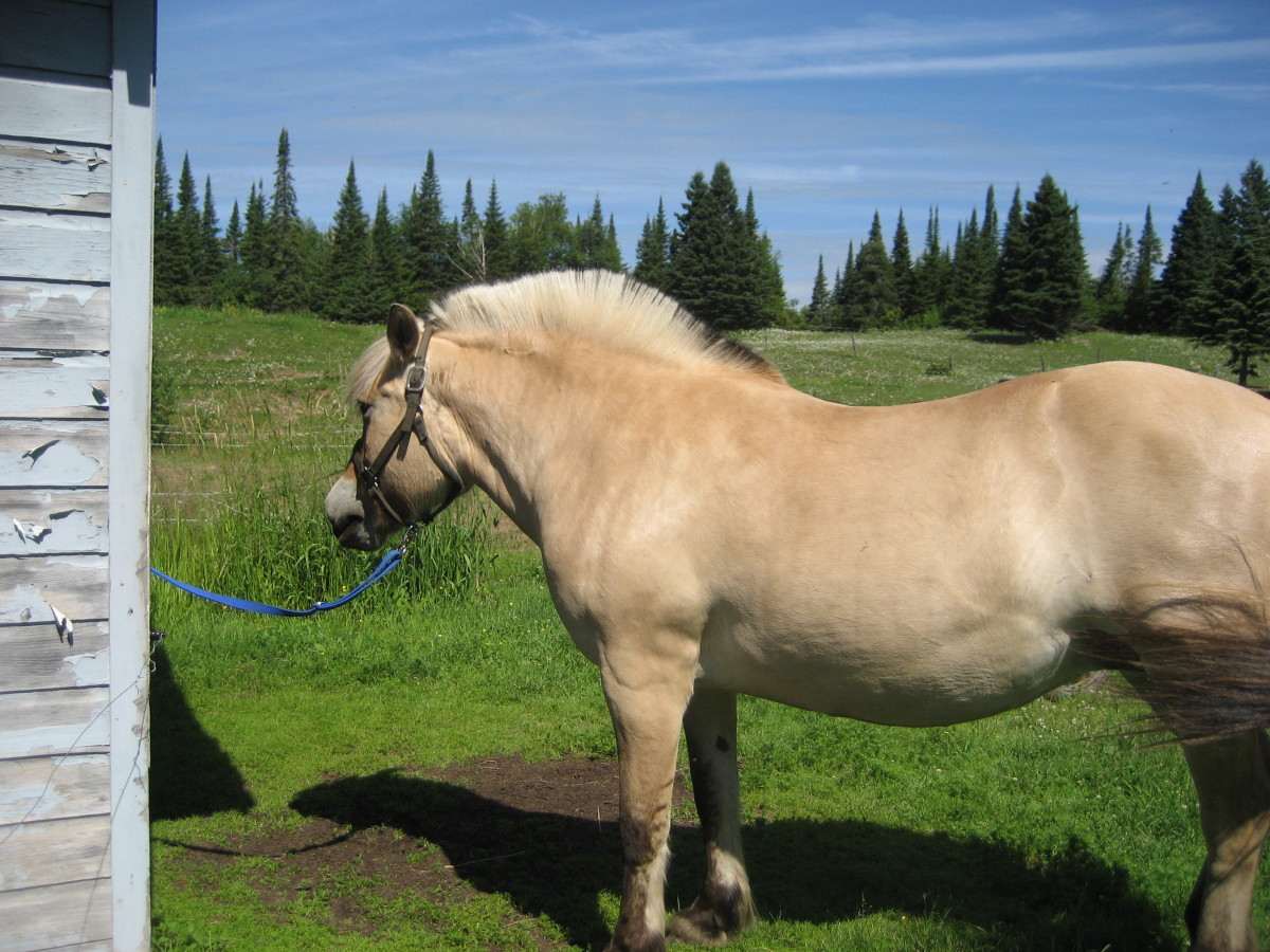 Preparing Your Property To Keep A Horse At Home