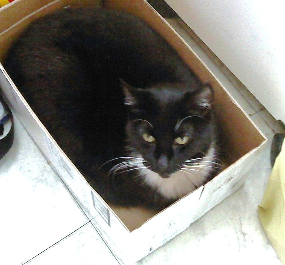 """MEOW..."" As you can see, our kitty Shadow is quite comfortable in boxes of all kinds - not just litter boxes.."