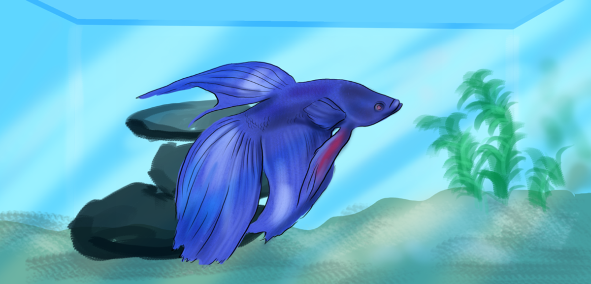 methylene blue instructions for fish treatment
