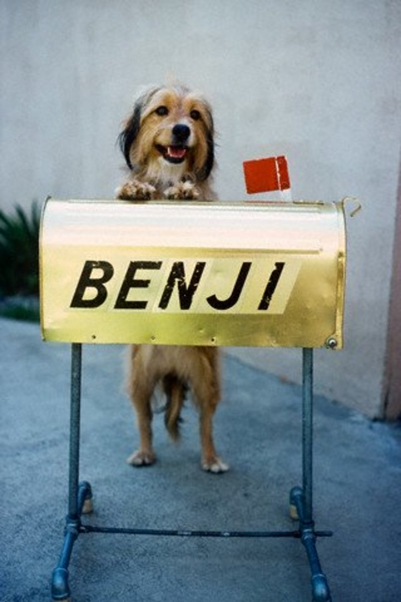 What happened to the days of unique names like Benji?