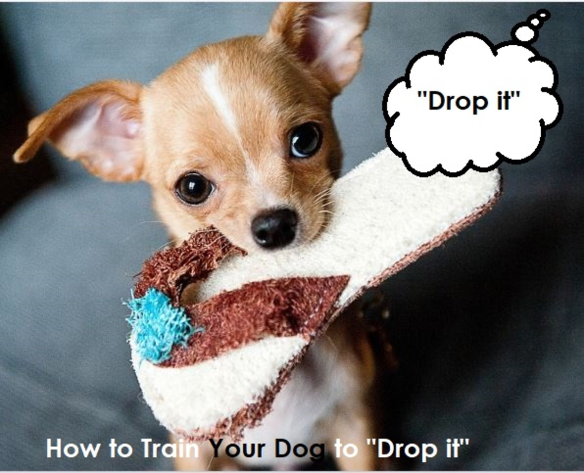 the-importance-of-training-your-dog-the-leave-it-and-drop-it-command