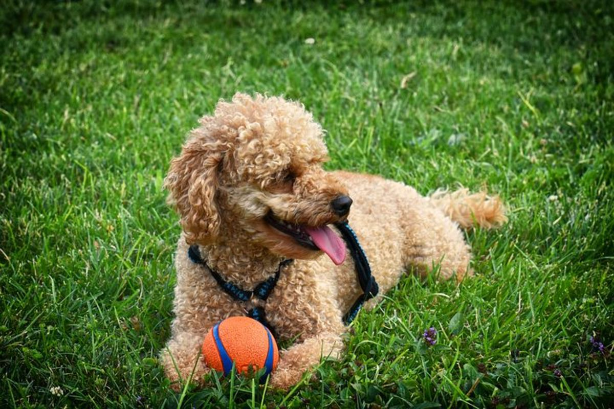 Encourage your dog to go potty before allowing play time.