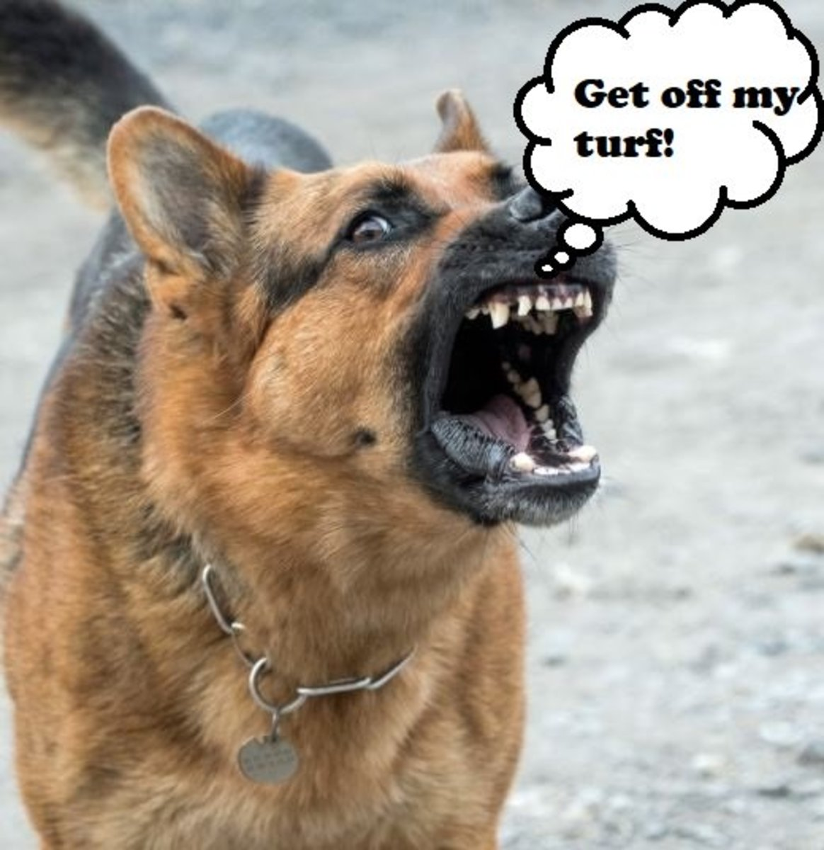 dog-behavior-what-to-do-with-a-dog-with-a-bite-history