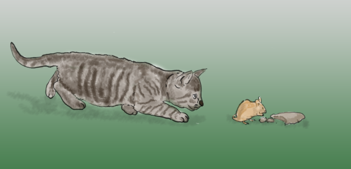 Observing a cat's hunting behavior
