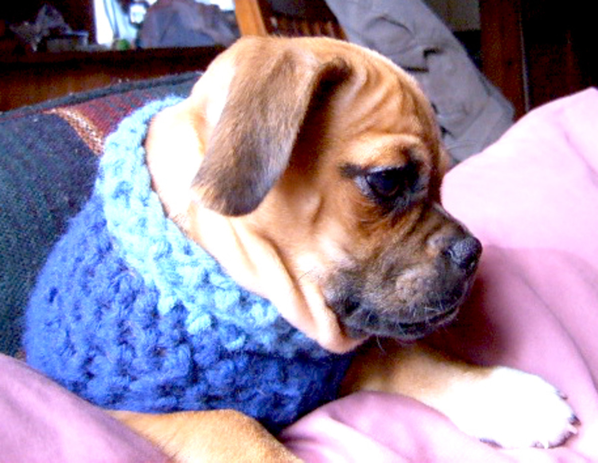 I used to crochet sweaters for Chopper when he was a baby. He was born at Christmas time, so he was being potty trained in the snow. He would never wear such a thing now.