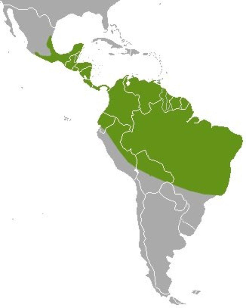 Distribution of the kinkajou in the wild