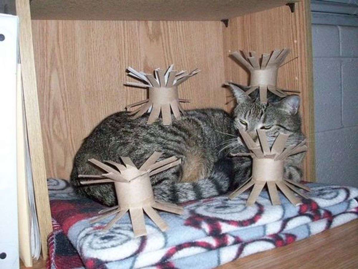 DIY Toilet Paper Toys for Cats