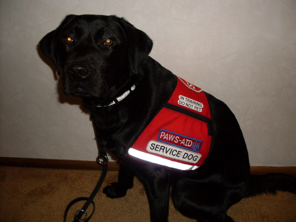 Service Dogs Can Assist with Many Invisible Disabilities
