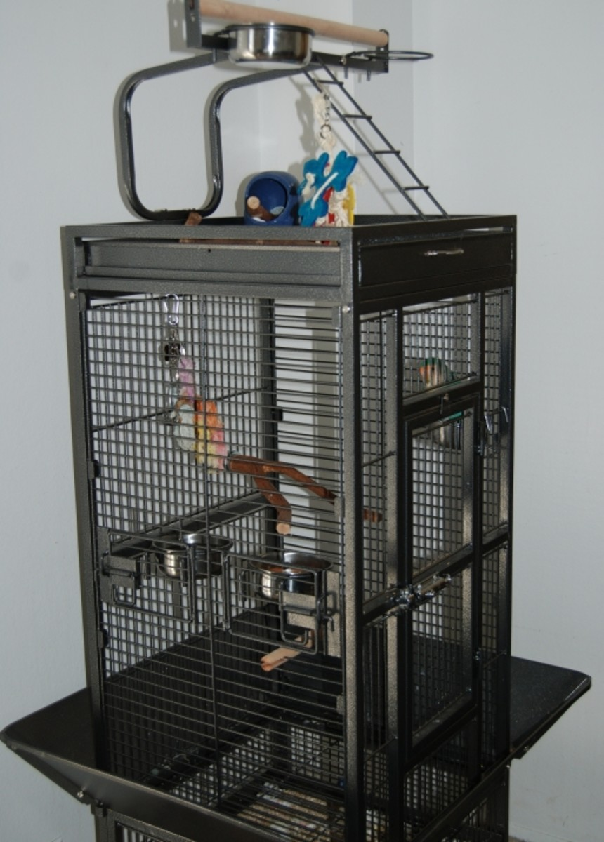Brand new, this powder-coated Prevue Cockatiel cage retails online between $120 and $250, depending on where you shop.