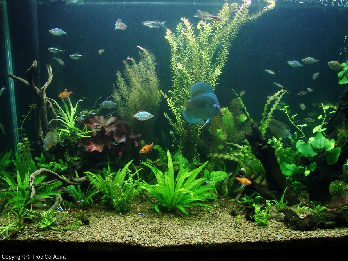 How to choose compatible fish for your community aquarium for Freshwater community fish