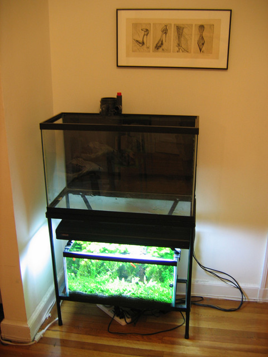 This photo is an example of how a painted background aquarium looks without water.
