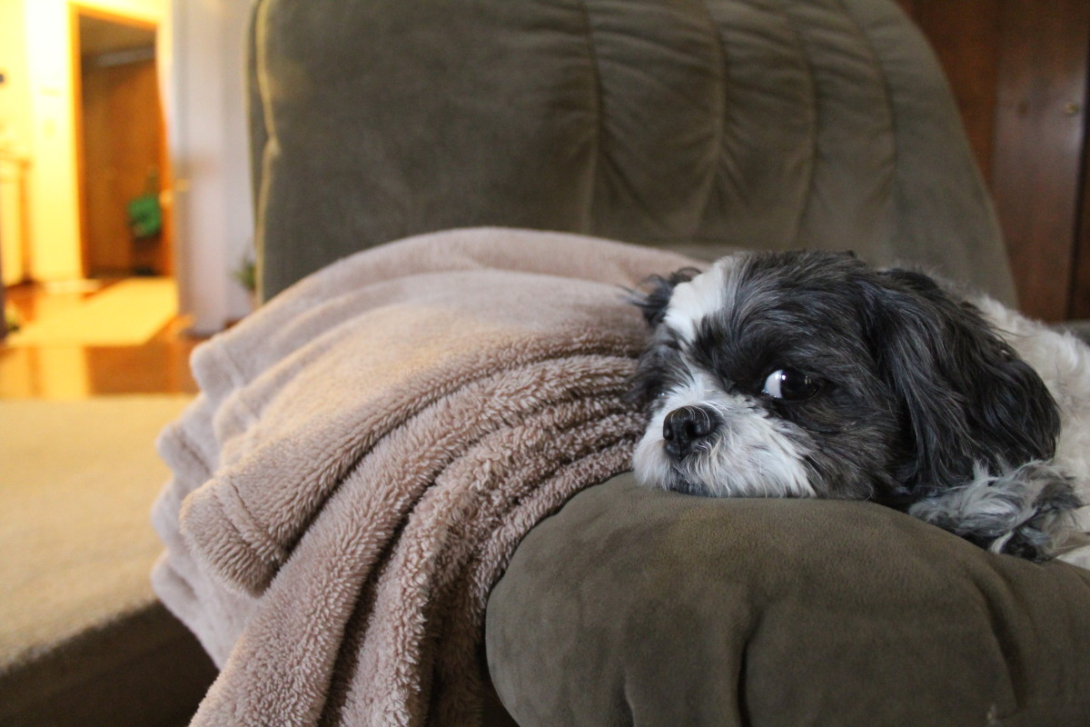 dog-health-causes-of-shivering-in-dogs