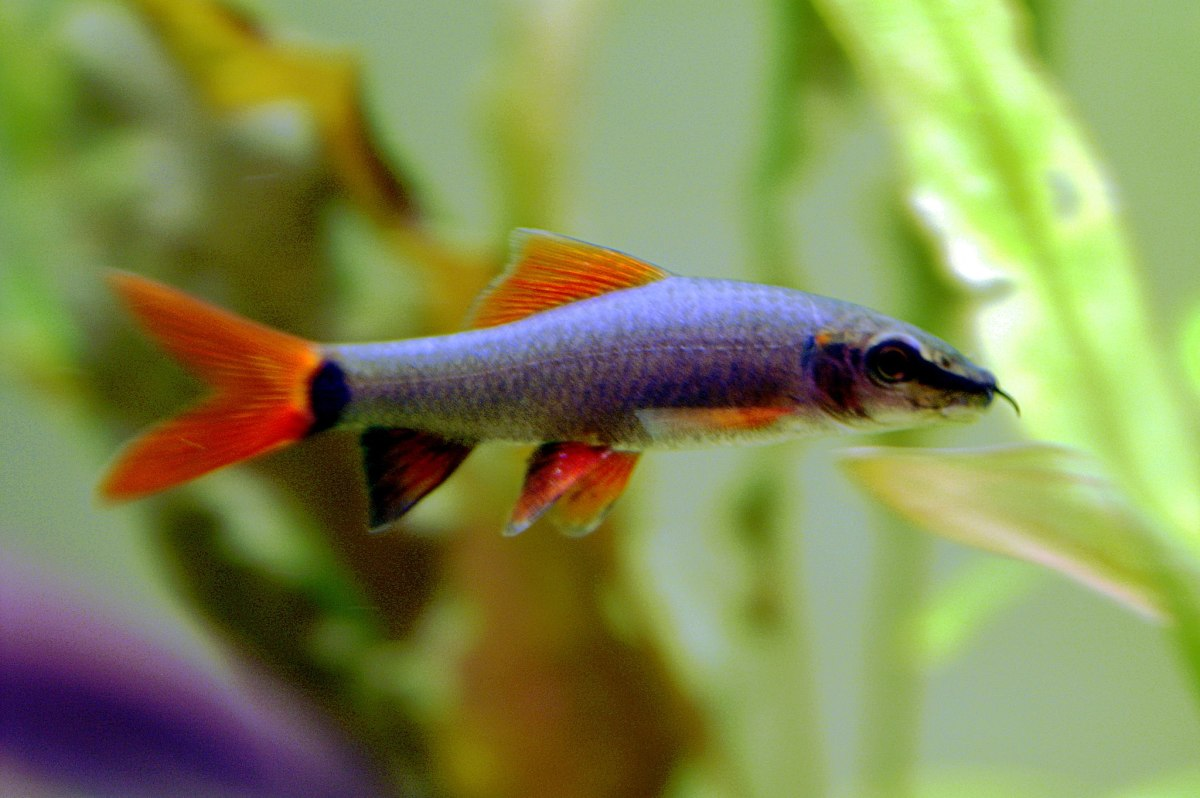 the-right-clean-up-critters-for-your-fish-tank-aquarium